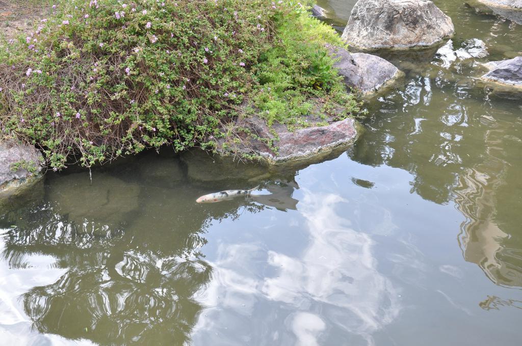 giardino giapponese, montecarlo