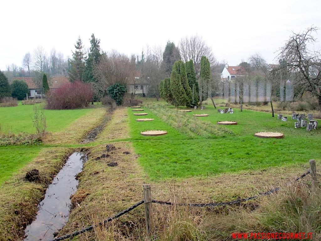 La Grenouillere: Giardino 1