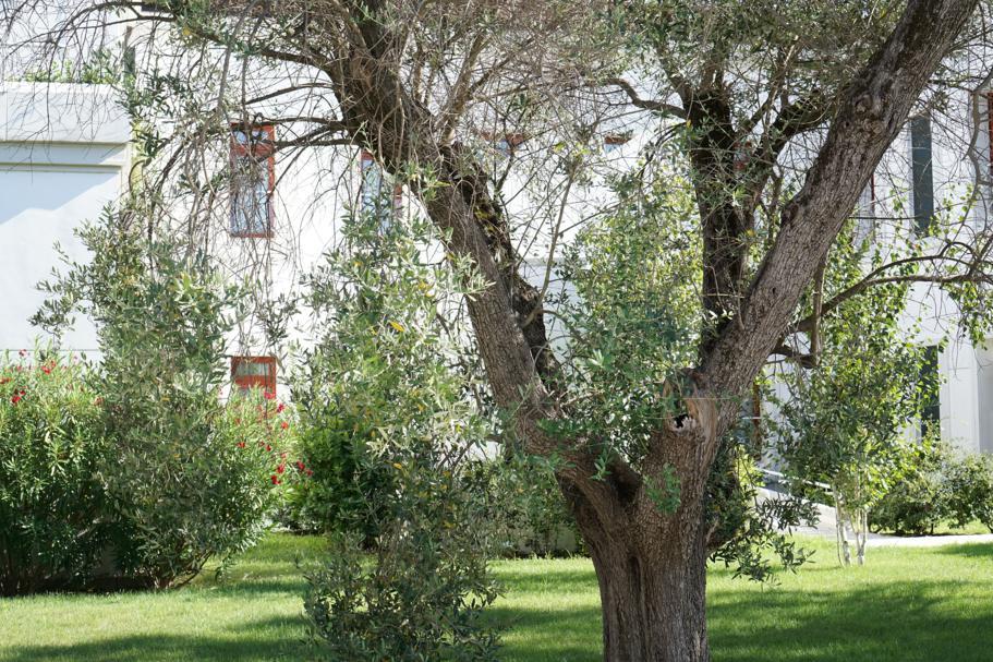 uliveto, JW Marriott Venezia, Isola delle Rose, Venezia